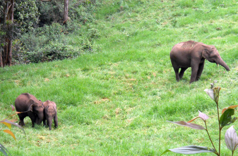 Wildlife at the Anaerangal lake at Munnar